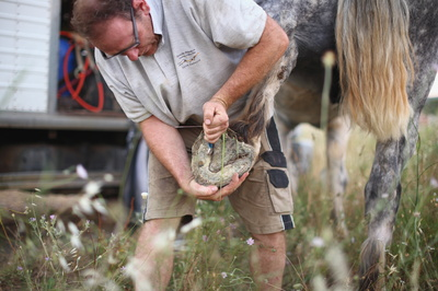 Benoit Braujou et ses chevaux de trait Bulle et Unau