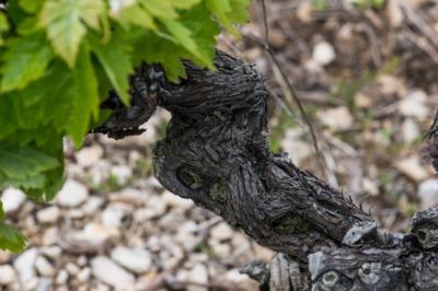 Les vins Calmel et Joseph