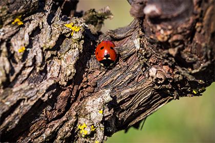 La biodynamie, une culture de la vigne en harmonie avec l'environnement