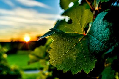 Vins du jura, macvin, vin de liqueur, eau-de-vie