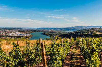Vignes vallée du Rhône