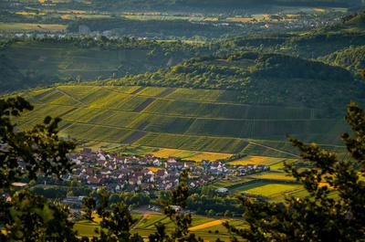 Vins du jura, vin jaune, vin de paille, vin rouge, vin blanc, macvin, percée du vin jaune