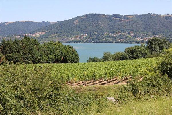 Les vignes de Laurent Combier au bord du Rhône
