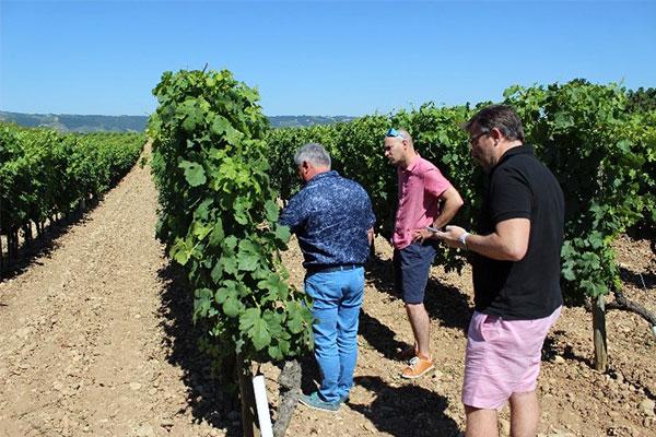 Laurent Combier nous montre la qualité de son raisin