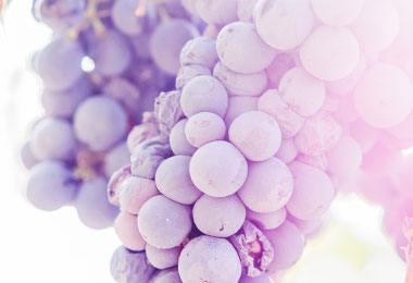 notre sélection de vins fleuris sur vinatis