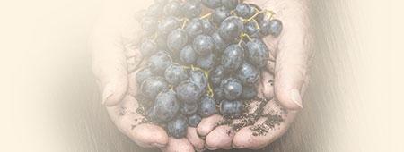 Nos valeurs, et notre politique tarifaire respectueuse du vignerons