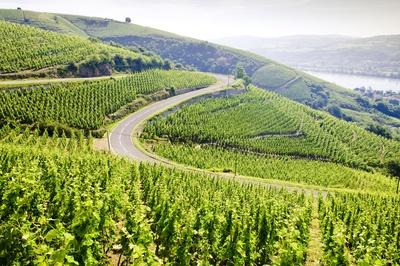 Vignoble de Côte-rôtie
