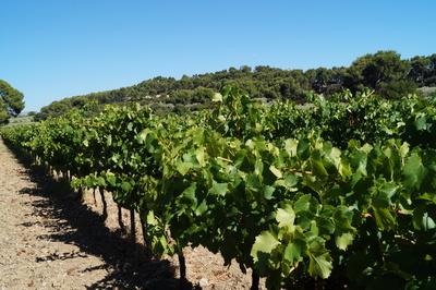 Vin bio rosé du Domaine de Valdition, Provence, Alpilles IGP
