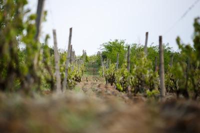 Terroir du Domaine Louis Chèze : Condrieu, Saint-Joseph, Vins de pays