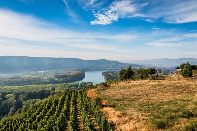 Vallée du Rhône - Le terroir de Seyssuel