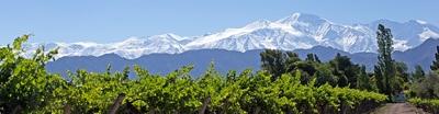 Vignoble de Mendoza- Argentine